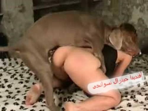 Porno Mit Animal